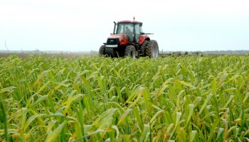 Russian ban on U.S. agricultural products to affect Texas