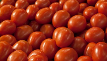 Texas tomatoes topic of June 18 workshop in Uvalde