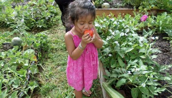 Failed vegetable growers invited to garden class series