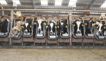 Growing dairy industry spotlighted at recent Southwest Dairy Day