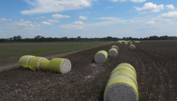 Texas crop, weather for Oct. 7, 2014