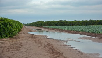 AgriLife Extension experts: South Texas agriculture under serious weather threat