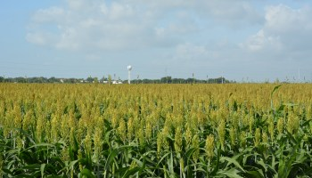 Stiles Farm Field Day scheduled June 16 in Thrall