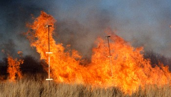 Aiming fire at seedlings may be key to rangeland mesquite control