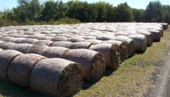 Training on winter pasture production set Aug. 14 at Overton