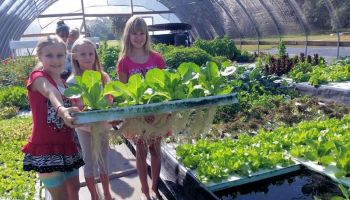 Basics of Aquaponics workshop slated Sept. 24 in Corpus Christi