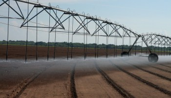 Texas crop, weather for Sept. 29, 2015