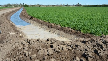 Lack of predicted rainfall good news for South Texas winter vegetables