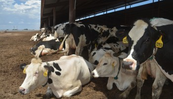 Water a major concern for dairy industry