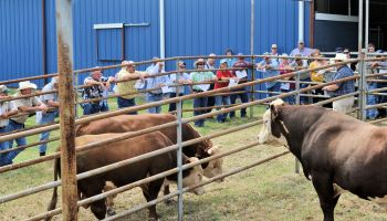 Fayette County Cow/Calf Clinic and Trade Show set for May 6 in La Grange