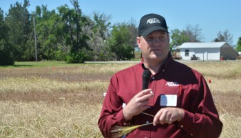 AgriLife Research: Rotation, cover crops impact cotton yields more than tillage