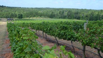 Northeast Texas grape growers gather in Harleton to learn, share