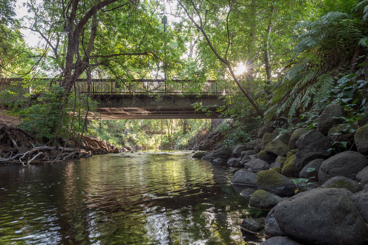 Big Chico Creek flows from the Sierra Nevada foothills, through Bidwell Park and the Chico State campus.