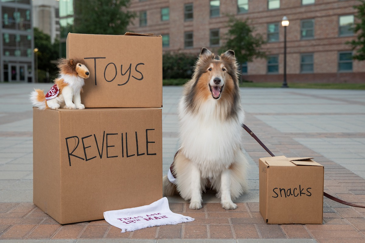 Reveill Being Reveille S Handler Is A Non Stop Job Texas A M Today