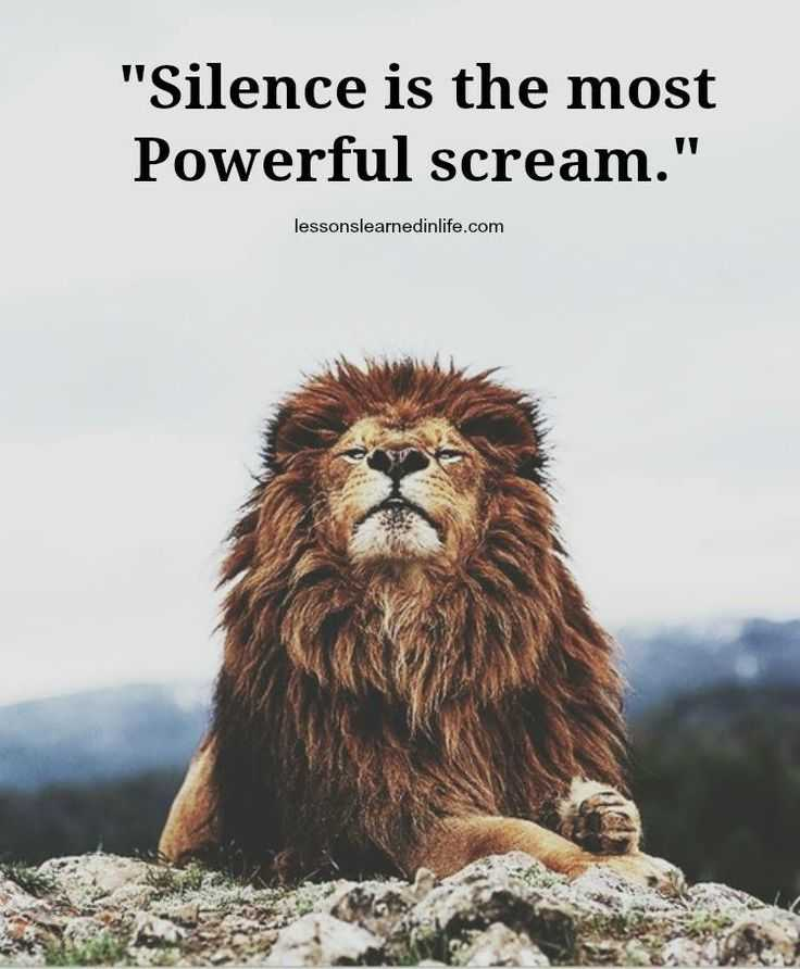 Warrior Cats Wallpaper With Quotes Is Quot Silence Is The Most Powerful Scream Quot Todayz News