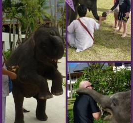 Phuket Elephant