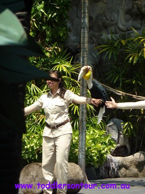 Bali safari and marine park review