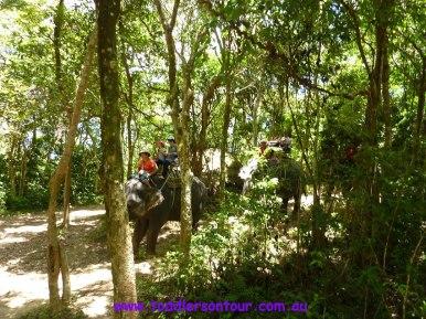 phuket elephant ride