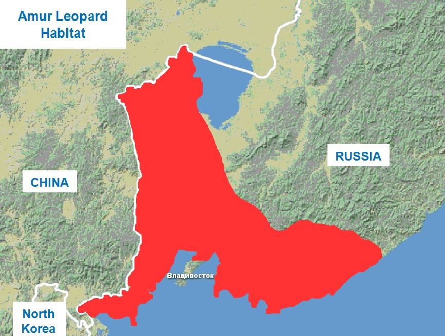 The area of the Far Eastern leopard