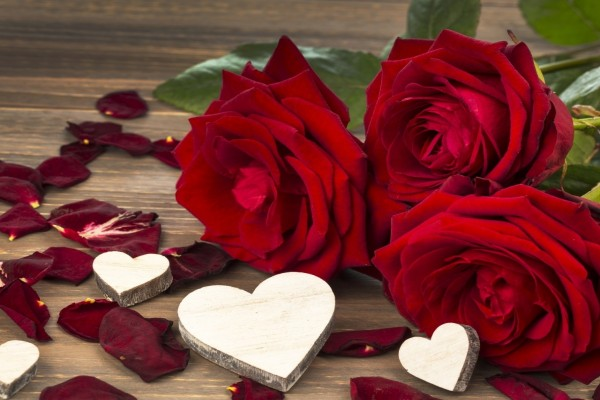 Rosa rojas, pétalos y corazones (53746) - rosas y corazones