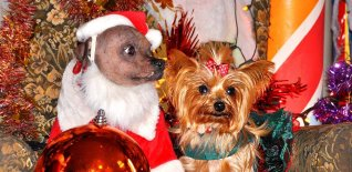 Doggie Christmas Pics - Thanks to BOWOWOW!