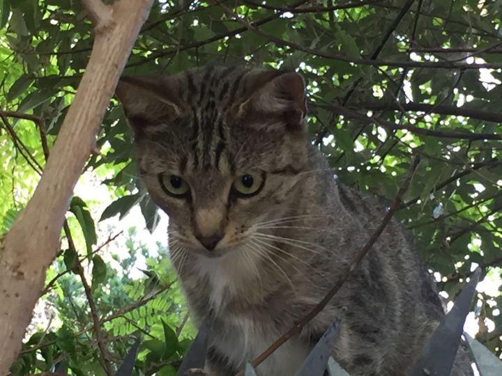 Cat_2_16 (1)
