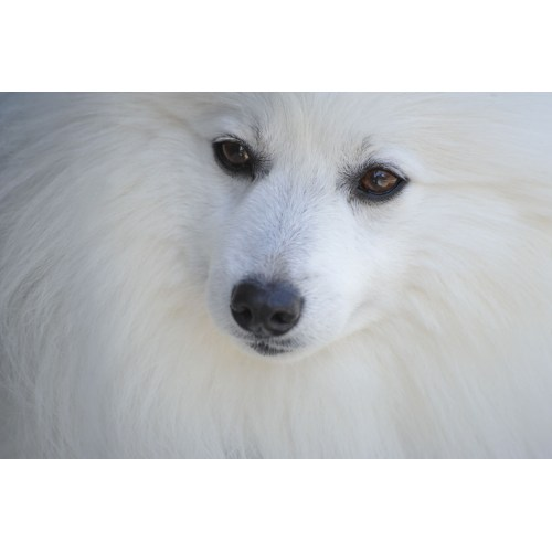 Medium Crop Of Fluffy White Dog