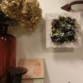 driedflowermarca