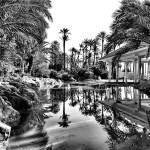 El Palmeral de #Alicante (III)
