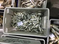 Melbourne-wholesale-fish-market-07