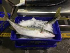 Melbourne-wholesale-fish-market-18