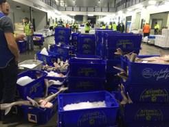 Melbourne-wholesale-fish-market-26