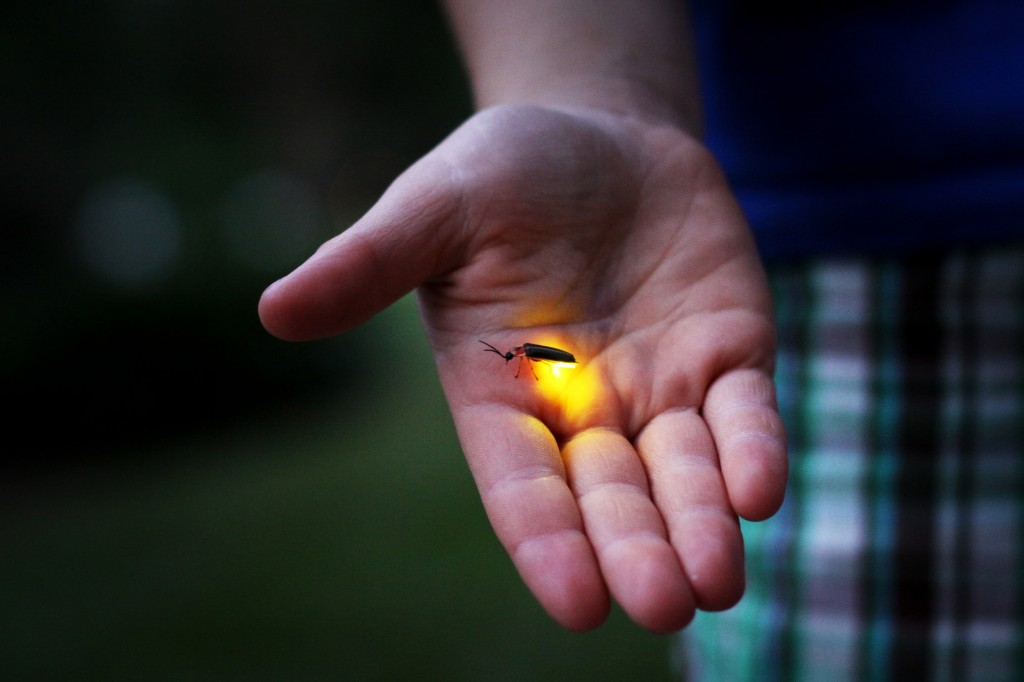 Firefly-in-Hand-1024x682