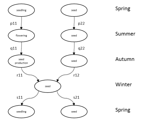 Fig. 1 Seasonal life cycle graph