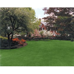 Small Crop Of Beautiful Lawn And Landscape