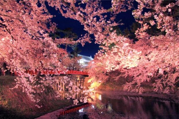 弘前城公園の夜桜
