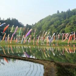 水田の上を焼く200匹の鯉のぼりが泳ぐ