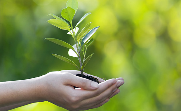 Hand holding and planting new tree with green bokeh background