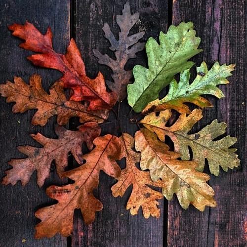 Autumn Leaf Fall Wallpaper H 248 Stbilder Fra Weheartit Tonebrathen