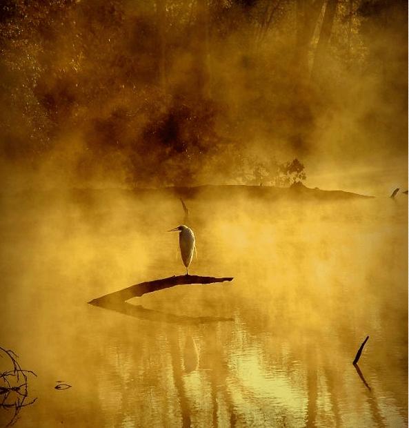 crane_on_a_southern_lake