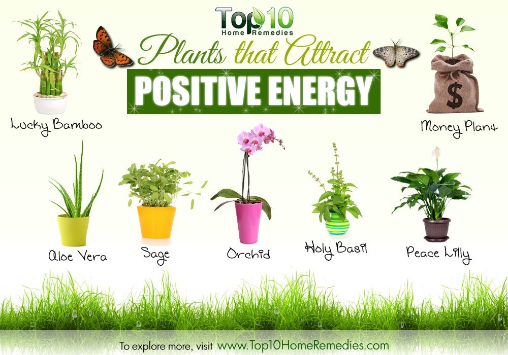 Feng Shui Bad Plants 10 Plants That Attract Positive Energy | Top 10 Home Remedies