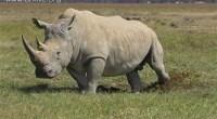 Top 10 maiores mamíferos do mundo
