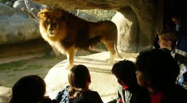 Top 10 melhores zoológicos do mundo