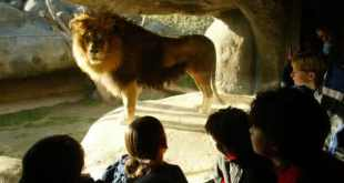 top 10 melhores zoologicos do mundo