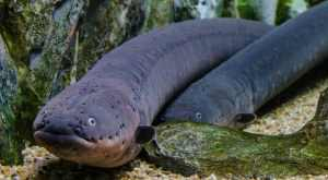 Top 10 peixes mais perigosos do mundo