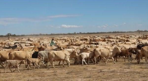 Innamincka entre as maiores fazendas do mundo