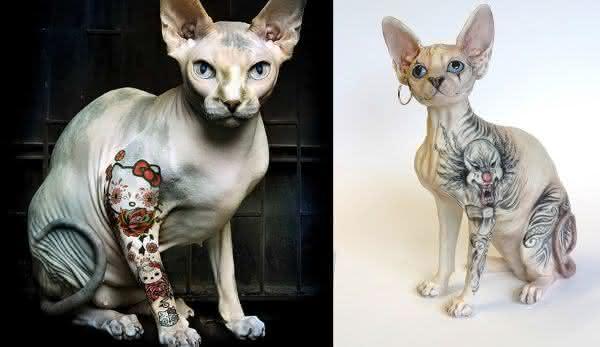 tatuagem em gatos entre as novas maneiras de fazer tatuagem