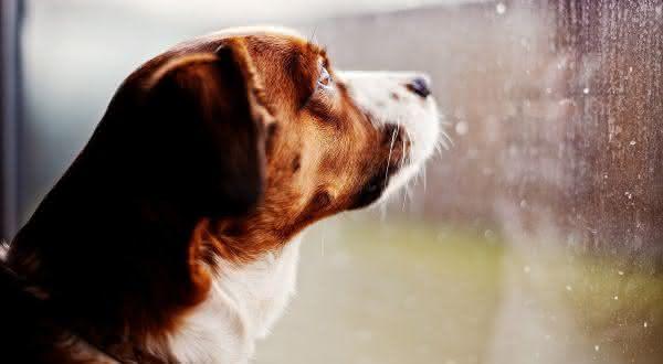 Top 10 coisas que você não sabia sobre o seu cão