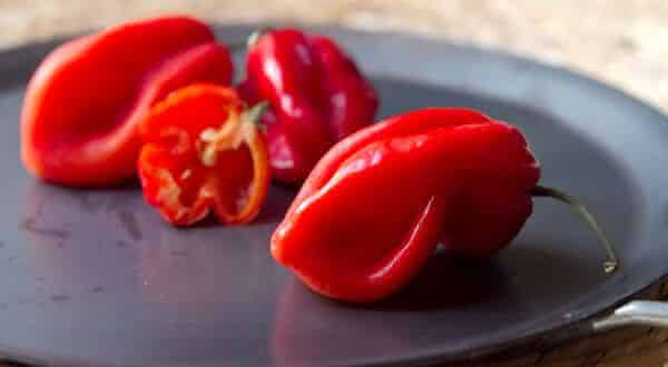 savina vermelha entre as pimentas mais fortes do mundo