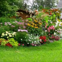 ოცნების ბაღი საკუთარი ხელით
